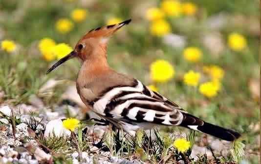 BirdsMountElgonNationalPark