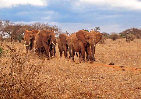 Sibiloi-National-Park elephants
