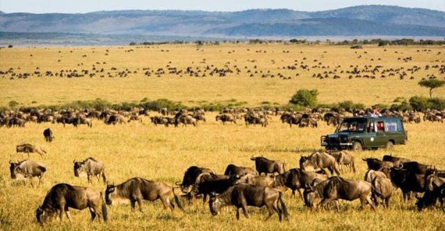 masai mara drives